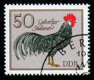 Galo italiano listrado dos galos alemães da série, cerca de 1979 Foto de Stock Royalty Free