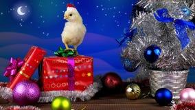 Galo novo amarelo que está na caixa de presente na decoração do Natal video estoque