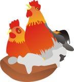 Galo novo e galinha Imagens de Stock Royalty Free