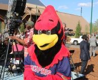 Galo o Redbird na grande inauguração Memphis Tennessee de Bass Pro Shop Fotografia de Stock Royalty Free