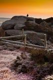 Galo silvestre nas rochas no nascer do sol Imagens de Stock Royalty Free