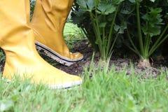 Galocha no jardim Fotos de Stock Royalty Free