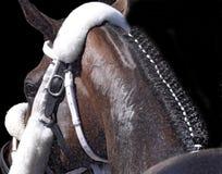 Galonowa Equine sztuka zdjęcie royalty free