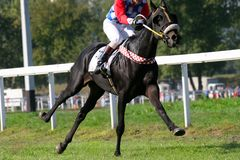 Galop stock foto