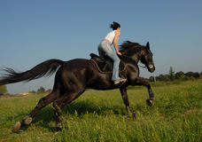 Galop Royalty Free Stock Images