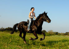 Galop Royalty Free Stock Image
