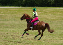 Galop Royalty-vrije Stock Foto