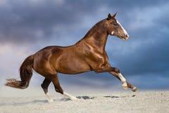 Galop de cheval dans le désert photo libre de droits
