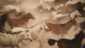 Galop de course de chevaux en poussière photographie stock libre de droits