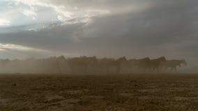Galop de course de chevaux en poussière Images libres de droits