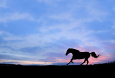Galop fort de cheval à la silhouette de coucher du soleil Images libres de droits