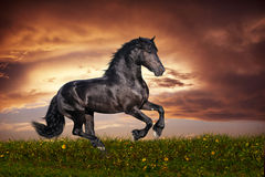 Galop frison noir de cheval Photo stock