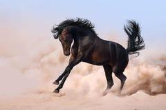 Galope da corrida do cavalo Fotos de Stock Royalty Free