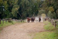 Galope de los caballos fotografía de archivo