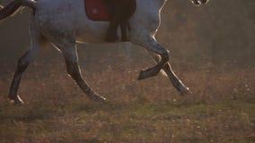 Galope de los enganches del caballo Cámara lenta Cierre para arriba Vista lateral almacen de video