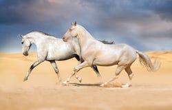 Galope del funcionamiento de dos caballos Fotografía de archivo