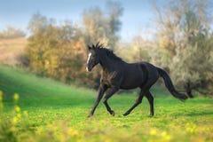 Galope do cavalo livre foto de stock