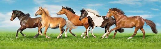 Galope do rebanho do cavalo imagem de stock
