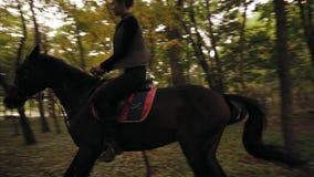Galope fêmea profissional do cavaleiro no parque: cavaleiro fêmea novo no cavalo em um galope obscuro da floresta Equitação no vídeos de arquivo