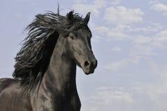 Galope negro de la corrida del caballo Imágenes de archivo libres de regalías