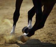 Galoper de cheval Photographie stock libre de droits