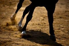 Galoper de cheval Image libre de droits