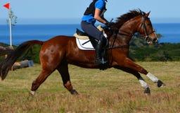 Galoper de cheval photo stock
