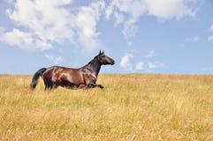 Galopes del caballo Fotografía de archivo libre de regalías