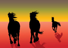 Galoping horses Royalty Free Stock Photos