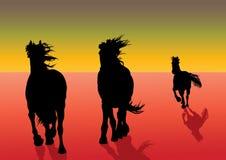 Galoping Pferde Lizenzfreie Stockfotos