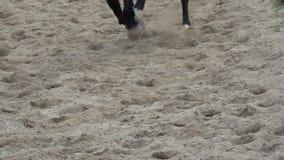 Galoppare degli zoccoli del cavallo Metraggio del movimento lento video d archivio