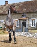 Galoppare del cavallo fotografia stock