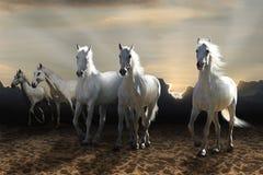 Galoppare del cavallo bianco Fotografia Stock