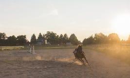 Galoppare del cavallo di Brown Fotografia Stock Libera da Diritti