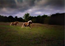 Galoppare miniatura dei cavalli Fotografia Stock