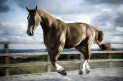 Galoppare pesante del cavallo Fotografia Stock