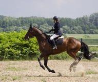 galoppera hästen Arkivbild