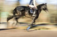 Galopperend donker paard royalty-vrije stock afbeeldingen