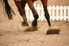 Galopperend paard Royalty-vrije Stock Afbeeldingen