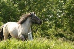Galopperend paard stock fotografie