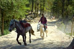 Galopperende Paarden Stock Fotografie
