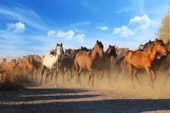 Galopperende paarden bij de aard Paarden het lopen Stock Foto's