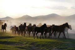 Galopperende paarden bij de aard Paarden het lopen Stock Afbeelding
