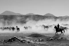 Galopperende zwart-witte paarden Royalty-vrije Stock Afbeeldingen