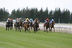 Galoppierende Rennenpferde Lizenzfreies Stockfoto
