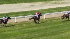 Galoppierende Rennpferde und Jockeys, wenn Wettbewerb gelaufen wird stock video