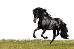 Galoppo nero di esecuzioni del cavallo Fotografie Stock Libere da Diritti
