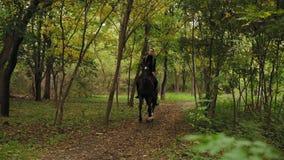 Galoppo in parco: Giovane cavaliere femminile sul cavallo su un galoppo ombreggiato della foresta Equitazione un giorno soleggiat stock footage