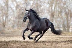 Galops de cheval de Frisian photographie stock