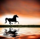 galopujący koń Zdjęcie Royalty Free